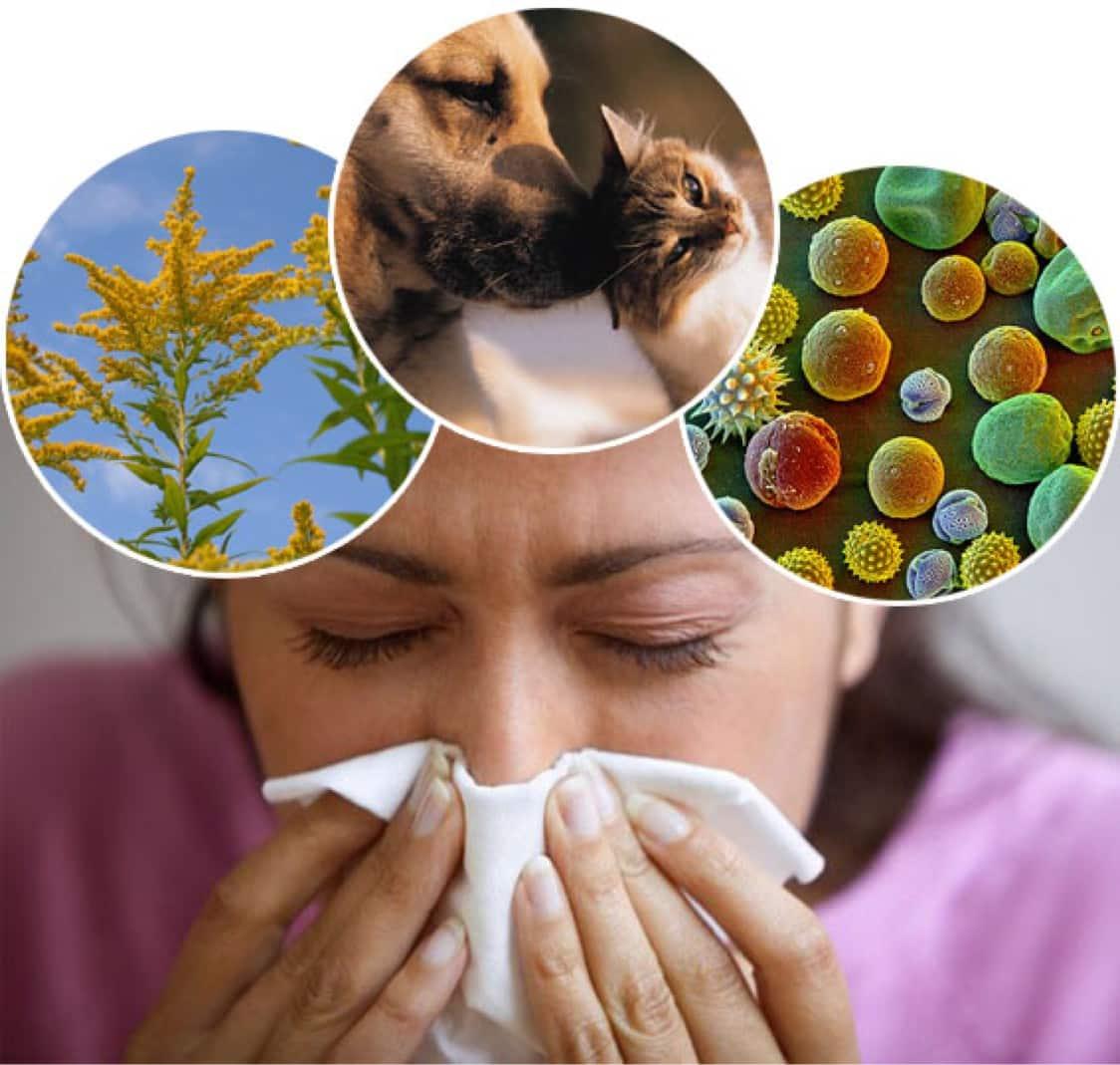 Основные виды аллергенов